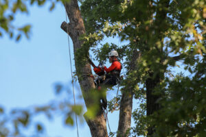 Tree removal in St. Pete