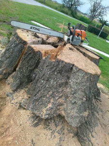 Tree removal St. Pete